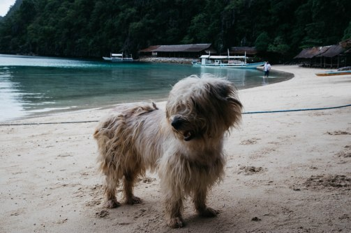 There are stray dogs EVERYWHERE in The Phillipines. How they got to those islands, I'll never know.